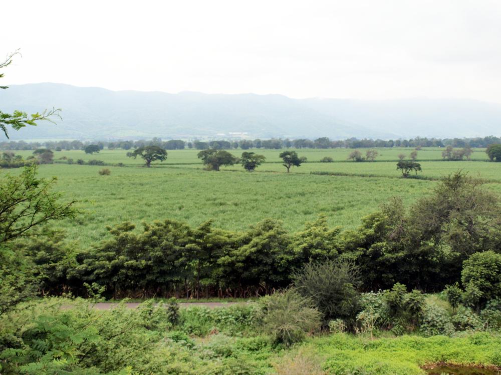 Observese el mosaico verde que refleja nuestro hermoso valle de El Grullo
